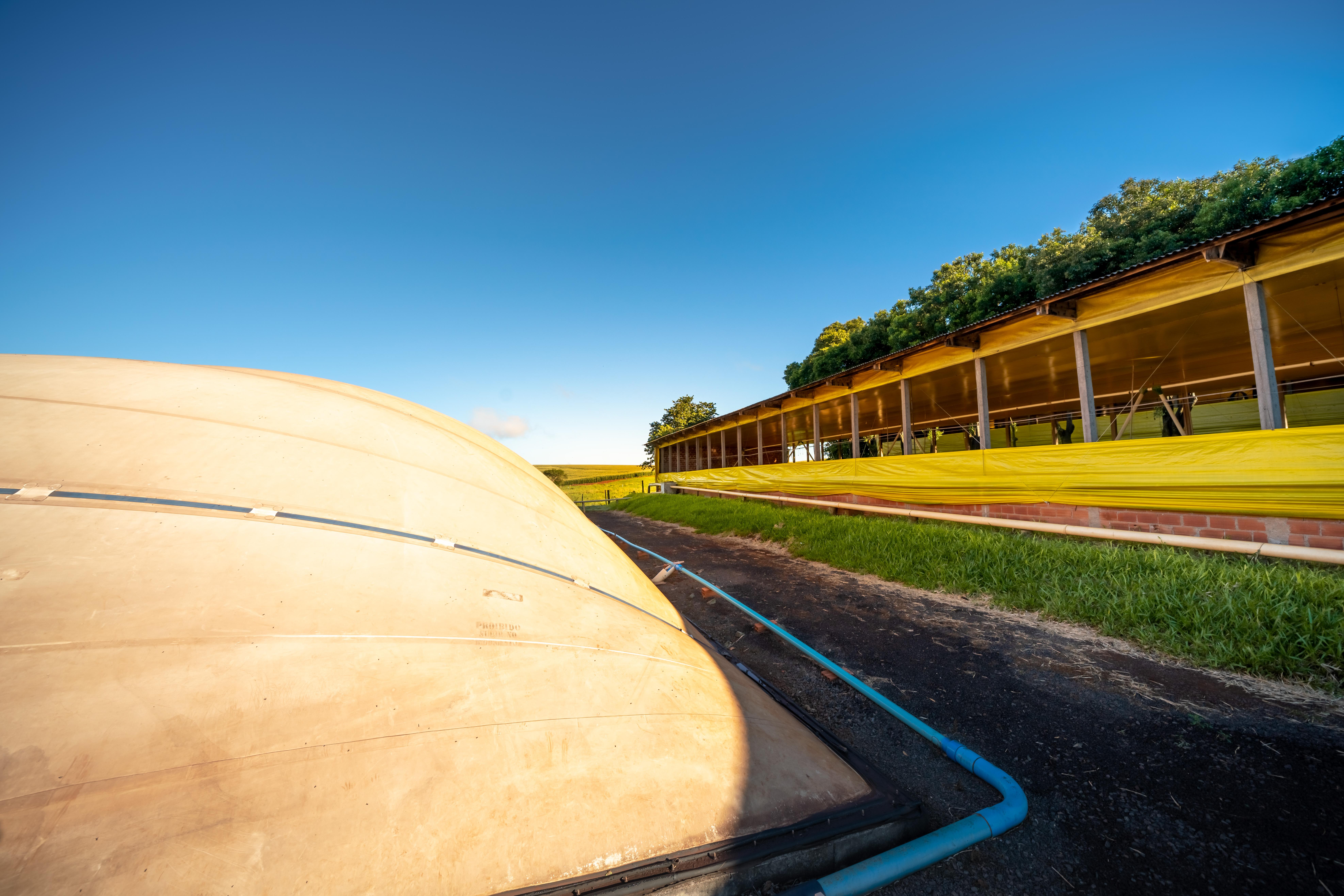 Biodigestor e suínos na granja São Pedro