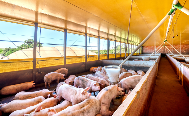 Covid-19 e Biogás: Produtores rurais tomam todos os cuidados contra o vírus