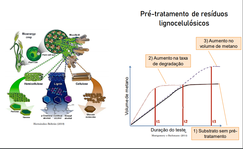 biogás e resíduos lignocelulósicos