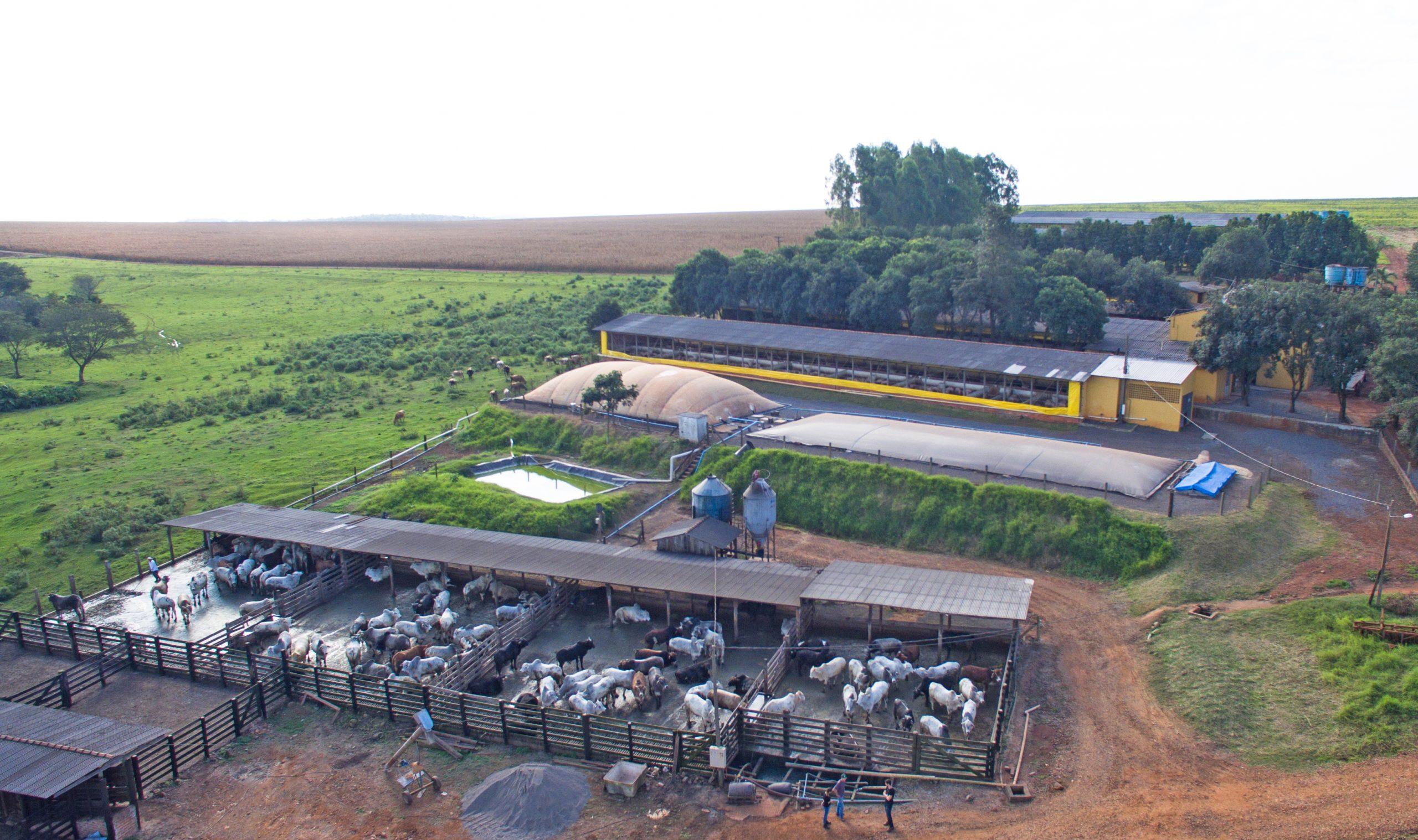 Microgrids e o biogás