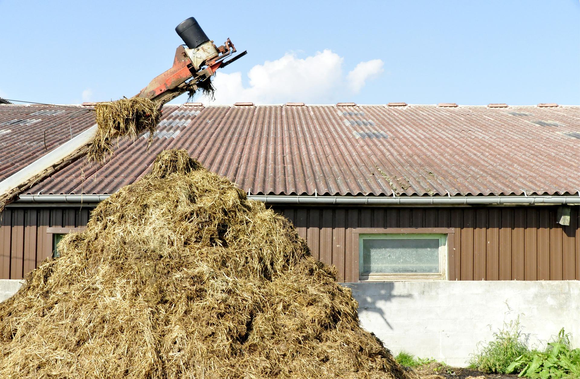 Biomassa e biogás